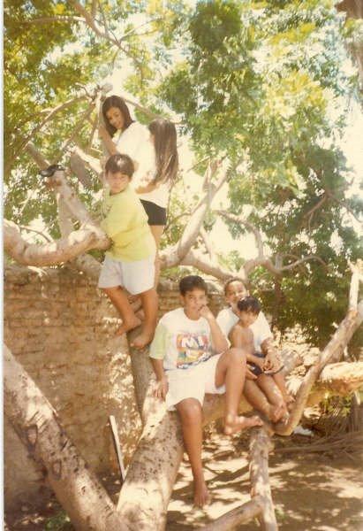 Subindo em árvore